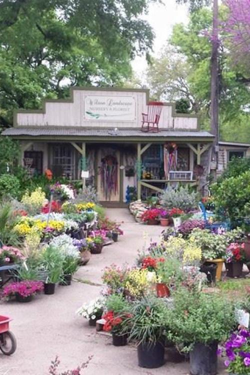 Helotes, TX San Antonio, TX Florist Wedding Floral Wilson's